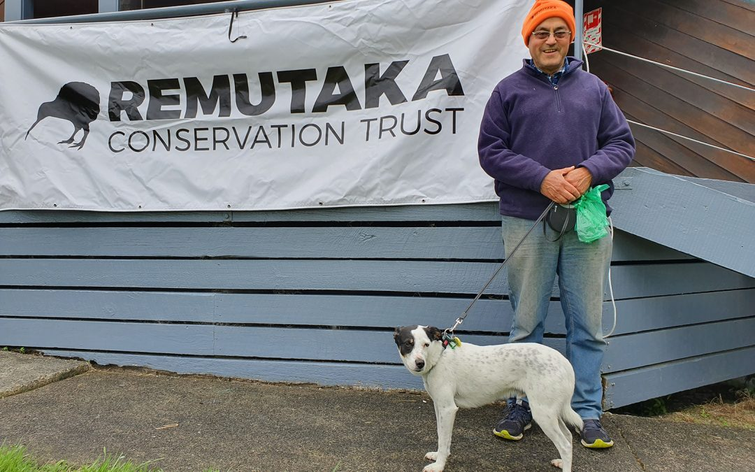 Keeping Kiwi safe in the Remutaka Forest Park